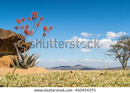 View of blue sky above African nature vista. Landscape exterior.