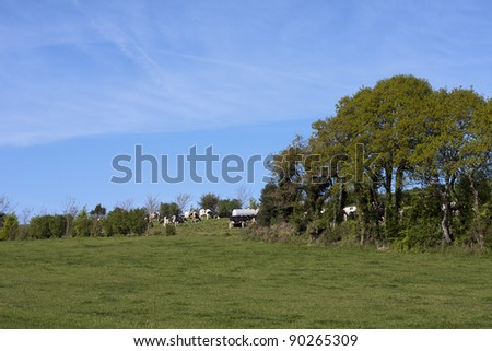 view of brittany with fields, tree,