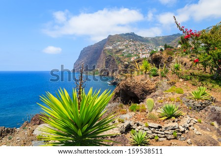 View of Cabo Girao cliff and Camara de Lobos town agave plants in foreground, Madeira island, Portugal  - stock photo