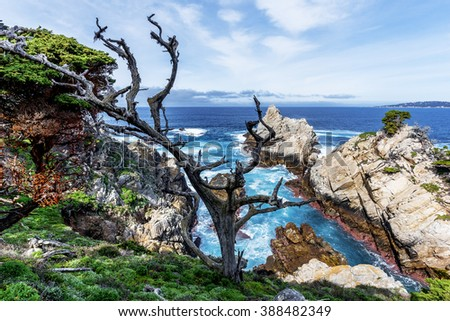 View of Carmel Bay through gnarly, twisted, crooked, Cypress trees with red lichen & Spanish moss growing on the branches, with unusual geological rock formations, blue seas, white clouds & blue sky - stock photo