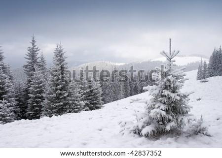 View of christmas tree through snow - stock photo