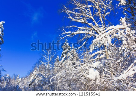 View of Christmas Trees - stock photo