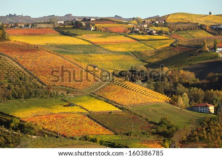 View of colorful autumnal vineyards on the hills of Langhe in Piedmont, Northern Italy. - stock photo