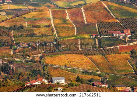 View of colorful autumnal vineyards on the hills of Piedmont, Northern Italy. - stock photo
