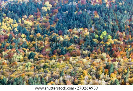 View of colourful forest trees in the autumn season, Caucasus, Russia - stock photo