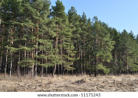 View of coniferous forest edge in spring time, Russia - stock photo