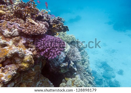 view of coral reef with hard corals at the bottom of red sea - stock photo
