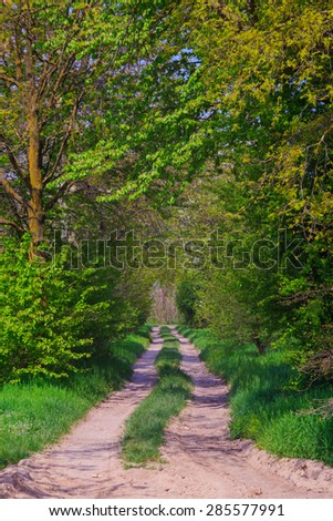 View of countryside road in the Ticino park, Italy - stock photo