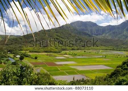 View of cultivated fields in kauai island from the hill with palm leaf frame - stock photo