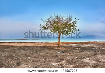 View of Dead Sea coastline at sunset with lonely tree in the foreground , Israel - stock photo