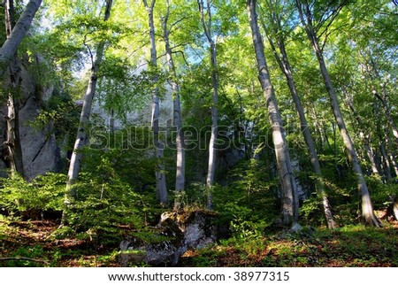 view of deciduous forest in sulov rockies - slovakia - slovak republic - stock photo