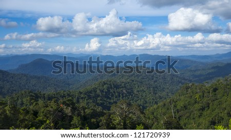 view of dense tropical rainforest in Malaysia - stock photo