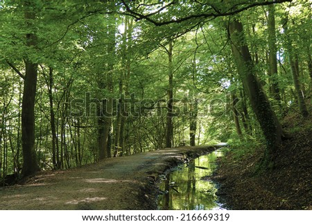 View of empty path through Skipton Castle woods. - stock photo