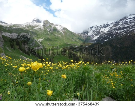 View of Engstligenalp mountains in the Swiss Alps, with marsh marigolds in the foreground