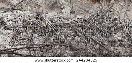 View of exposed tree roots on a river bank on the west coast of Tasmania, Australia - stock photo