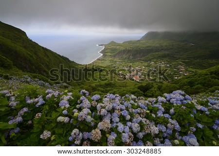 View of Fajãzinha with Hydrangea macrophylla in the foreground, Flores, Azores, Portugal - stock photo
