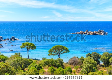 View of famous Palombaggia beach with pine trees and azure sea, Corsica island, France - stock photo