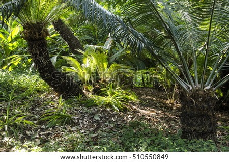 View of ferns on the forest floor with sunlight shining through