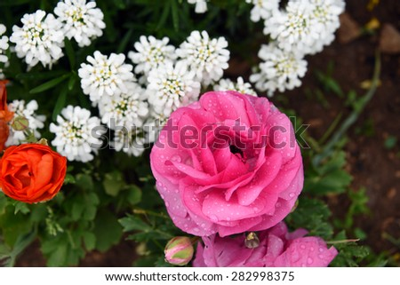 view of flowerbed from top - stock photo