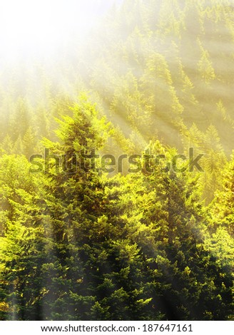 View of forrest of green pine trees on mountainside with warm glowing sunlight - stock photo