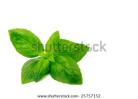 View of fresh basil over a white background - stock photo