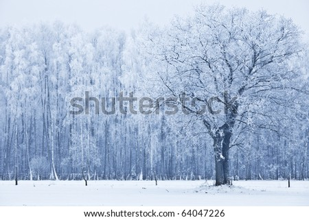 View of frozen tree against forest. Blue tone. Rural landscape. - stock photo