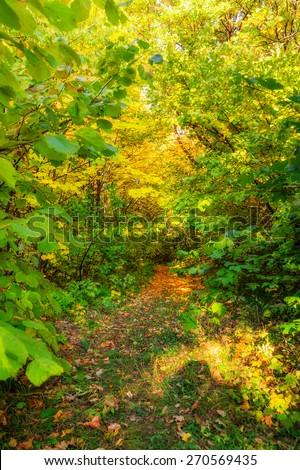 View of glade in greenwood in autumn time - stock photo