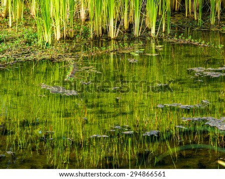 View of green reed and the reflection in water - stock photo