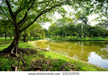 View of green trees in the park - stock photo