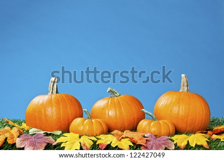 View of halloween pumpkins arranged with autumn leaves against blue background.