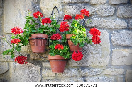 View of Hanging Baskets Containing Red Geranium (Pelargonium hortorum) Flowers - stock photo