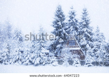 View of house among trees through snowing.