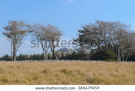 View of Kestor Rock between Hawthorn Trees on Chagford Common, near the Rural Town of Chagford, within Dartmoor National Park, Devon, England, UK - stock photo