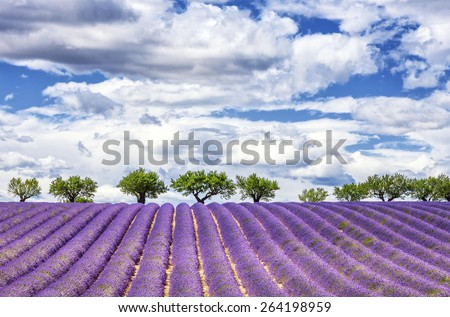 View of lavender field, France, Europe - stock photo