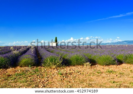 view of lavender fields in bloom in Provence in southern france - stock photo