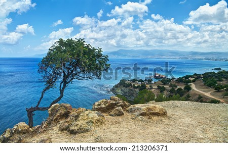 view of lonely tree and sea on Akamas peninsula, Cyprus - stock photo
