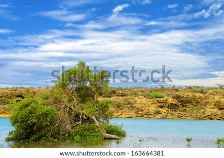 View of mangrove tree just off the coast of La Guajira, Colombia - stock photo