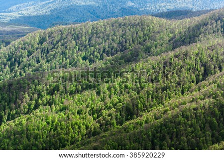 View of mountains and wood. View of the mountain wood. The wood on hills.