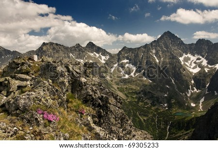View of mountains with pink flowers in the foreground. Slovakian High Tatra Mounains. - stock photo