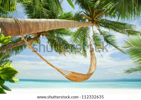 view of nice hummock with palms around in tropical environment - stock photo