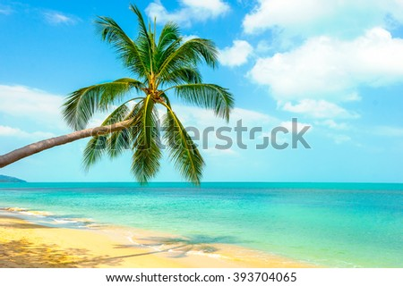 View of nice tropical beach with palms around
