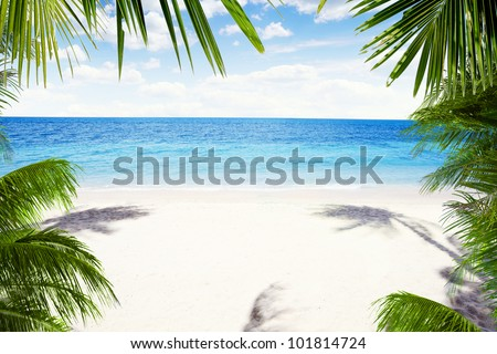 View of nice tropical  beach  with some palms around
