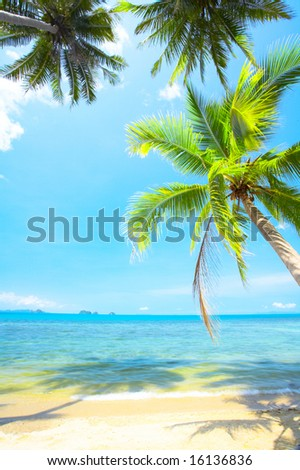 View of nice tropical empty sandy beach with some palm - stock photo
