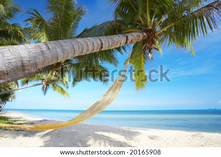 View of nice tropical empty sandy beach with some palm and hammock - stock photo