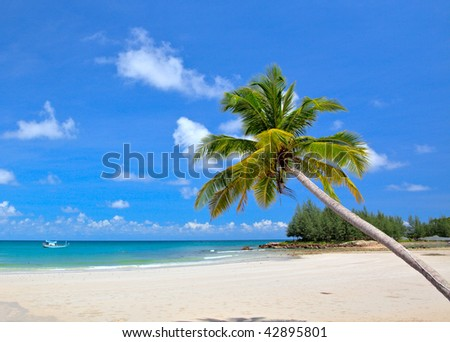 View of nice tropical empty sandy beach with some palm and sky background