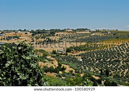 View of olive groves and countryside, Ubeda, Jaen Province, Andalusia, Spain, Western Europe.