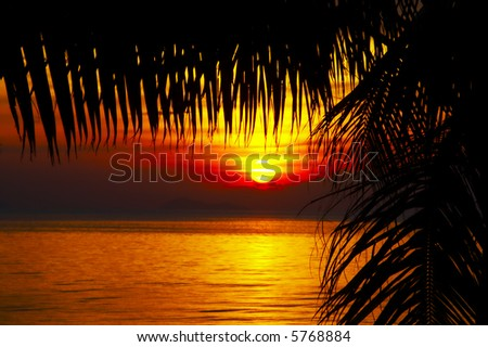 view of palm leafs black outlines during sunset on the beach