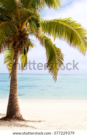 view of palm tree at the empty tropical beach - stock photo