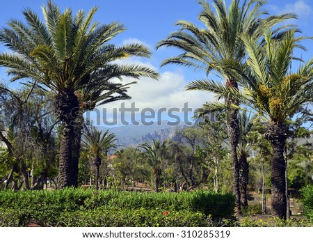View of palm trees and mountains against blue sky in Las Americas,Tenerife,Canary Islands.