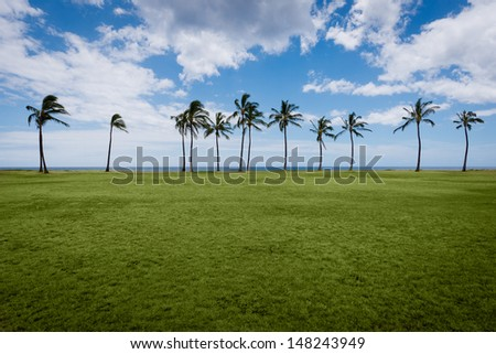View of palm trees at a beach park under cloudy skies. - stock photo